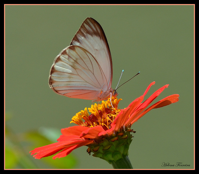 Butterfly and red flower.