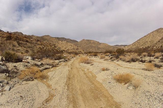 Long Canyon (21489)