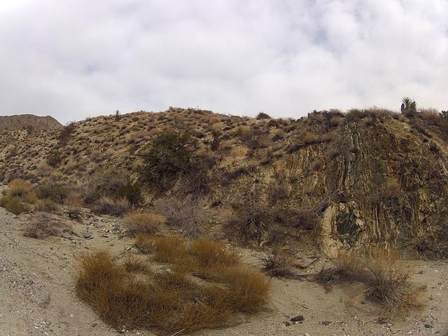 Long Canyon (21618)