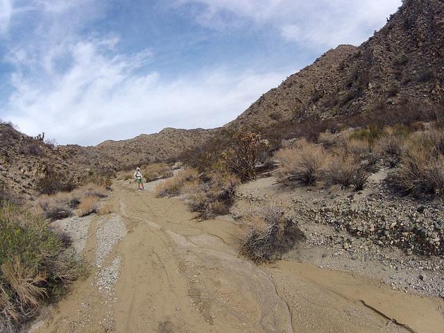 Long Canyon (21246)
