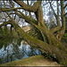 Worcester College tree trunk