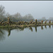 riverside stumps