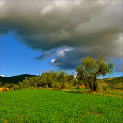 Spring sky and Olive Trees.