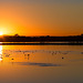 Baylands Winter Sunrise