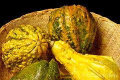 Gourds with Chris Buscaglia Lenz Texture  101713