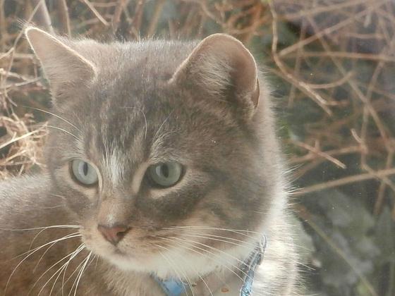 Pretty cat