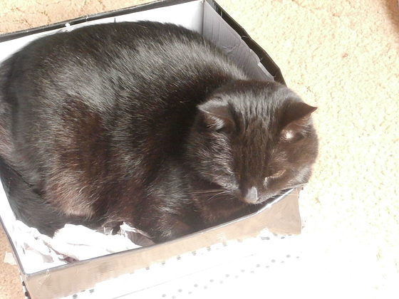 ''This is my box'' says Boo