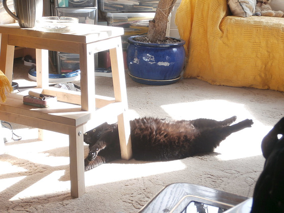 Boo stretching to enjoy the sun