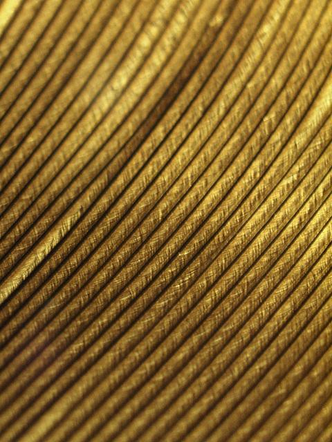turkey feather macro