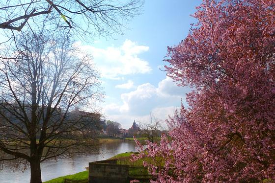 Frühling im Elbtal - Blick auf Pirna - printempo en la Elbvalo - elrigardo sur Pirna