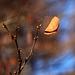 Old Leaf & New Buds