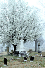 Springtime in the cemetery