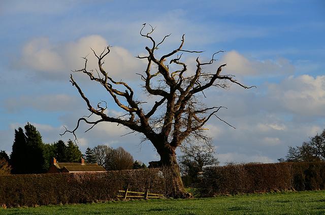 Lone Tree, Haughton