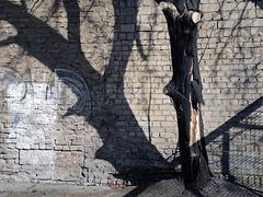 Der Stadtbaum