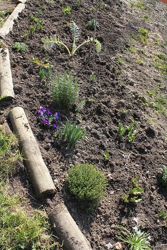 Plantations (4)