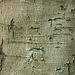 Texture - Bark_1