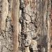 Texture - Bark_3