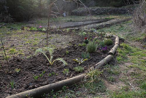 Plantations en cours (2)