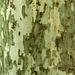 Texture - Bark_4