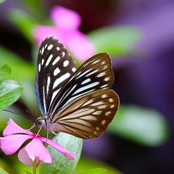 A delicate delight !