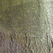 Texture - Bark_5