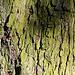 Texture - Bark_9