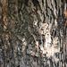 Texture-Bark_10