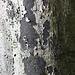 Texture - Bark_10