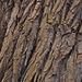 Texture - Bark_13