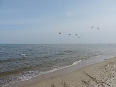 Märzmorgen an der Ostsee