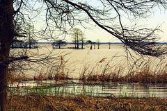 Lake Mattamuskeet, winter