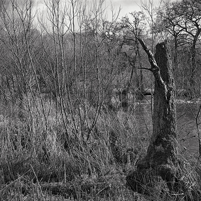 Derbyshire Wye - Twixt Black Barn and Elliottholme