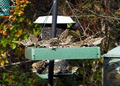 Flocked Feeders