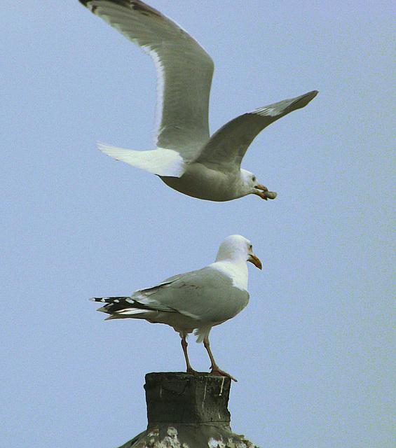 GMP Birds 023