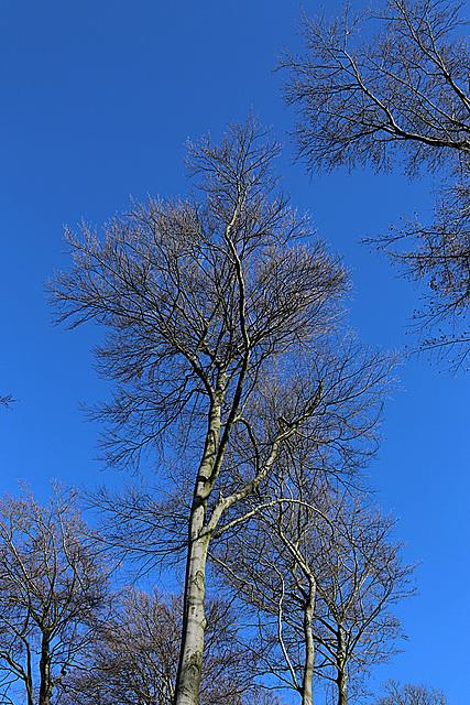 20140209 0039VAw [D-BS] Baum