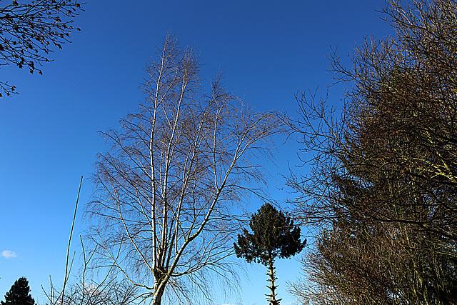 20140209 0028VAw [D-BS] Bäume