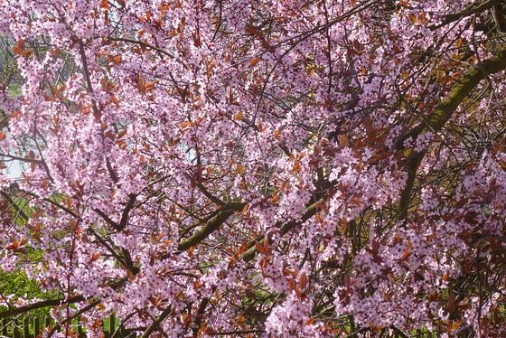 Blüten - Reichtum - Fülle - floroj - riĉeco - abundeco