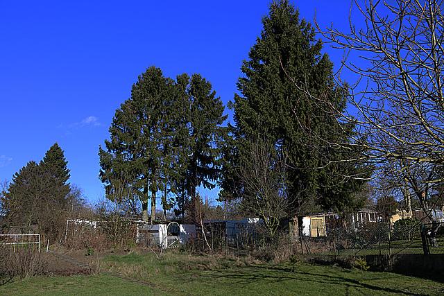 20140209 0024VAw [D-BS] Bäume
