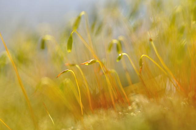 Moos im Sonnenlicht / moss in the sunlight