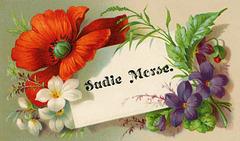 Sadie Morse