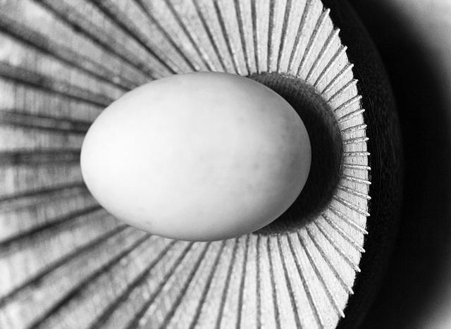 duck egg 1