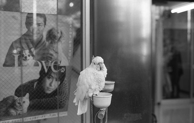 Parrot at an animal hospital