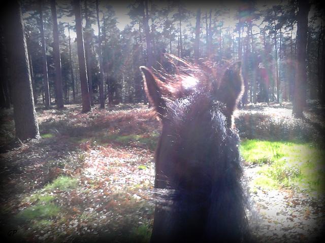Dans les bois .............
