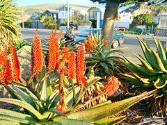 Garden by Sumner Beach