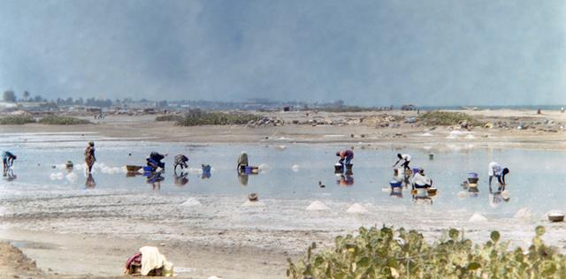 les femmes : la récolte du sel dans le Lac Rose