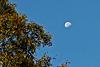 Waning Daytime Moon