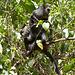 Maternité dans la forêt tanzanienne