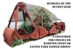 Buckets of Buddleia - Newhaven - 5.4.2014