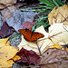 Butterfly amid leaves