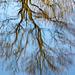 20140310 0843VRAw [D-E] Spiegelung, Gruga-Park, Essen